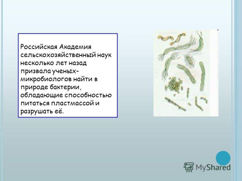 Российская Академия сельскохозяйственный наук несколько лет назад призвала ученых- микробиологов найти в природе бактерии, обладающие способностью питаться пластмассой и разрушать её.