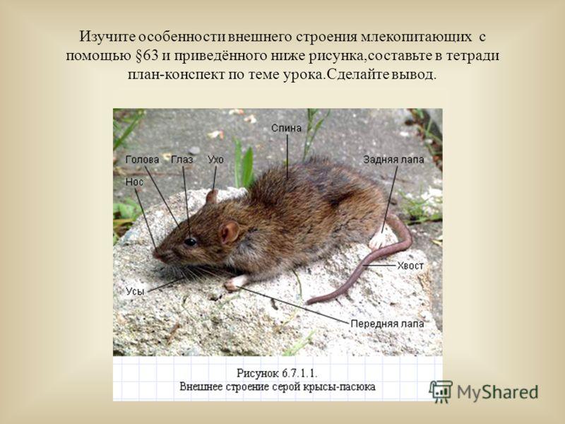 На основе фотографий и текста §63 составить таблицу: Экологические типы Местообитание Представители пп млекопитающих млекопитающих