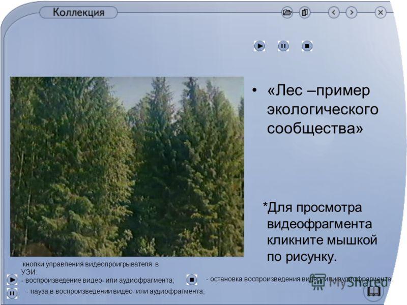«Лес –пример экологического сообщества» *Для просмотра видеофрагмента кликните мышкой по рисунку. кнопки управления видеопроигрывателя в УЭИ: - воспроизведение видео- или аудиофрагмента; - пауза в воспроизведении видео- или аудиофрагмента; - остановк