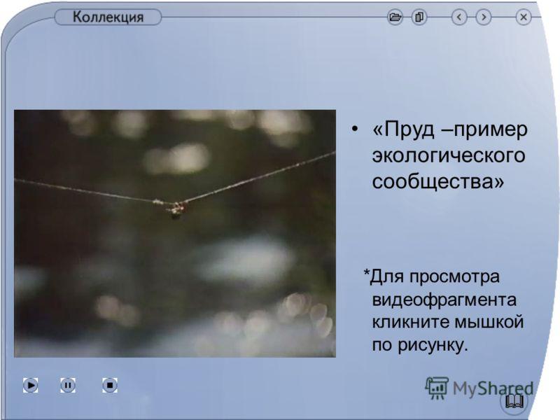 «Пруд –пример экологического сообщества» *Для просмотра видеофрагмента кликните мышкой по рисунку.