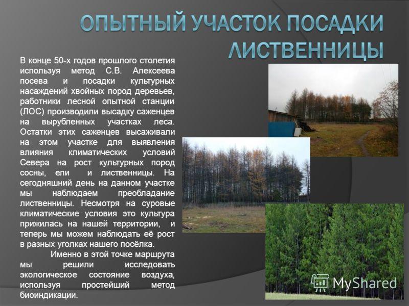 В конце 50-х годов прошлого столетия используя метод С.В. Алексеева посева и посадки культурных насаждений хвойных пород деревьев, работники лесной опытной станции (ЛОС) производили высадку саженцев на вырубленных участках леса. Остатки этих саженцев