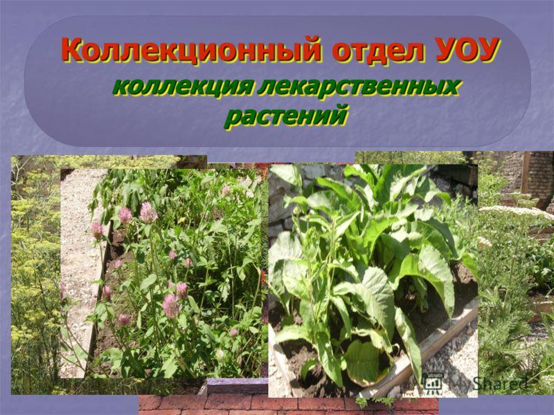 Коллекционный отдел УОУ коллекция лекарственных растений