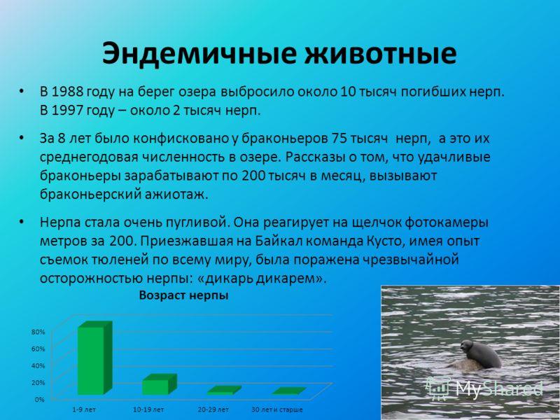 Эндемичные животные В 1988 году на берег озера выбросило около 10 тысяч погибших нерп. В 1997 году – около 2 тысяч нерп. За 8 лет было конфисковано у браконьеров 75 тысяч нерп, а это их среднегодовая численность в озере. Рассказы о том, что удачливые