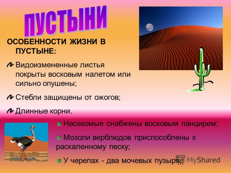 ОСОБЕННОСТИ ЖИЗНИ В ПУСТЫНЕ: Видоизмененные листья покрыты восковым налетом или сильно опушены; Стебли защищены от ожогов; Длинные корни. Насекомые снабжены восковым панцирем; Мозоли верблюдов приспособлены к раскаленному песку; У черепах - два мочев