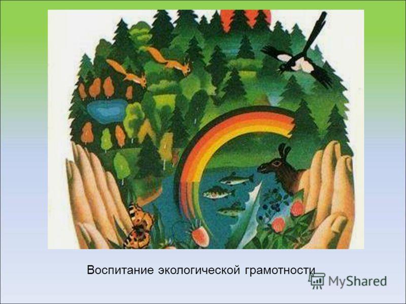 Воспитание экологической грамотности