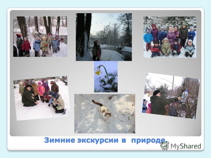 Зимние экскурсии в природе.