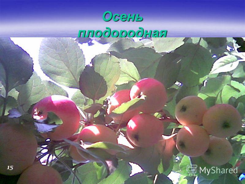 Осень плодородная 15