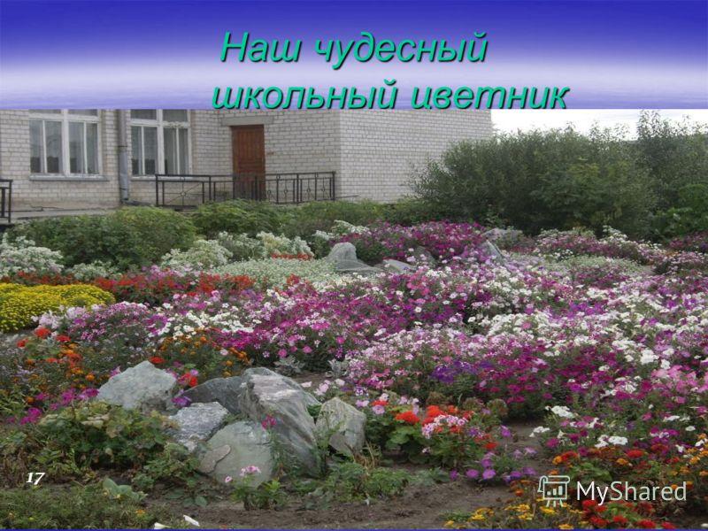 Наш чудесный школьный цветник 17