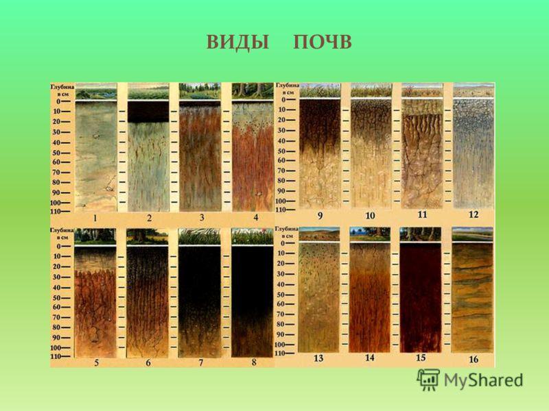 ВИДЫ ПОЧВ http://www.nadirstudio.ru/images/books/soil /217965063.jpg