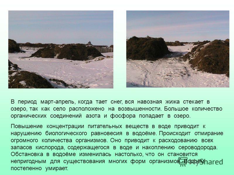 В период март-апрель, когда тает снег, вся навозная жижа стекает в озеро, так как село расположено на возвышенности. Большое количество органических соединений азота и фосфора попадает в озеро. Повышение концентрации питательных веществ в воде привод