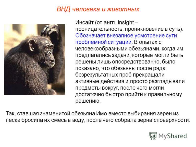 ВНД человека и животных Инсайт (от англ. insight – проницательность, проникновение в суть). Обозначает внезапное усмотрение сути проблемной ситуации. В опытах с человекообразными обезьянами, когда им предлагались задачи, которые могли быть решены лиш