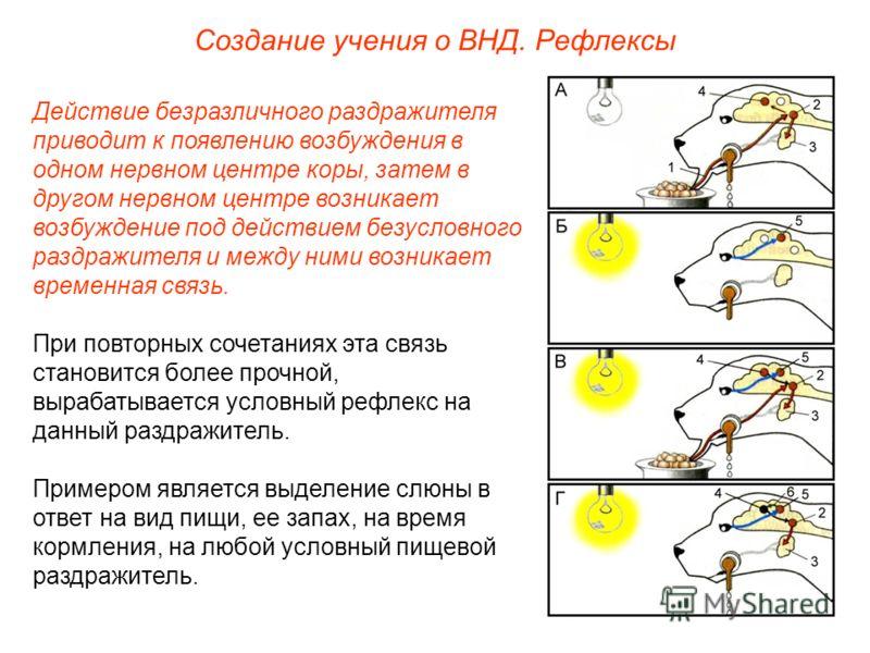 Создание учения о ВНД. Рефлексы Действие безразличного раздражителя приводит к появлению возбуждения в одном нервном центре коры, затем в другом нервном центре возникает возбуждение под действием безусловного раздражителя и между ними возникает време