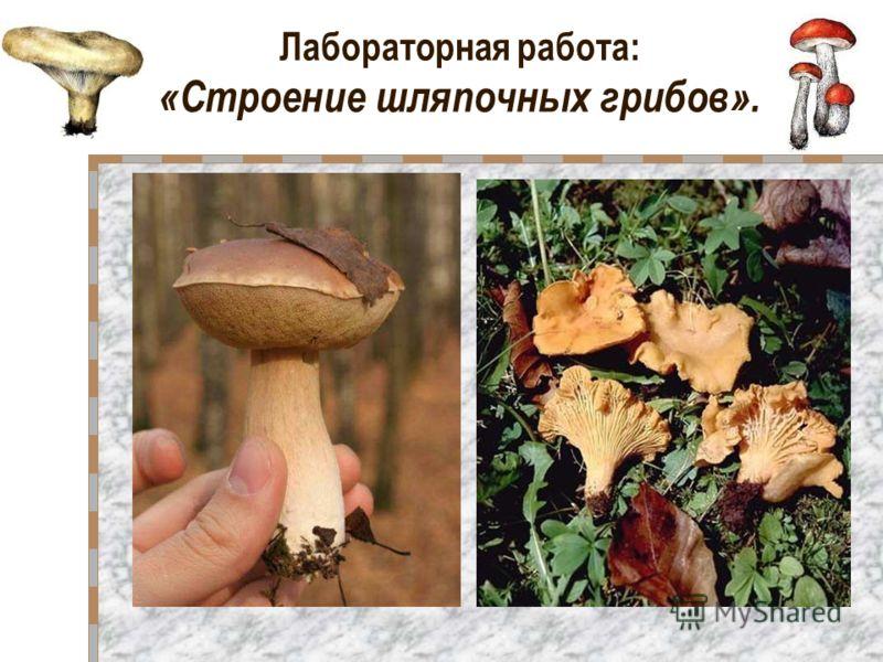 Лабораторная работа: «Строение шляпочных грибов».