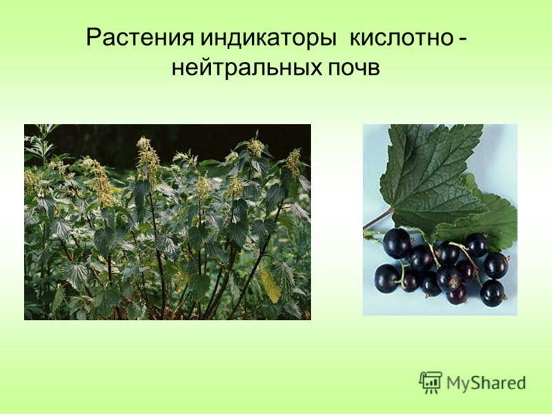 Растения индикаторы кислотно - нейтральных почв