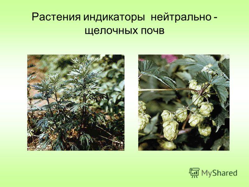 Растения индикаторы нейтрально - щелочных почв