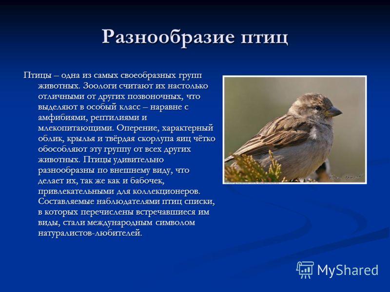 Разнообразие птиц реферат по биологии Доклад по биологии многообразие птиц 7 класс