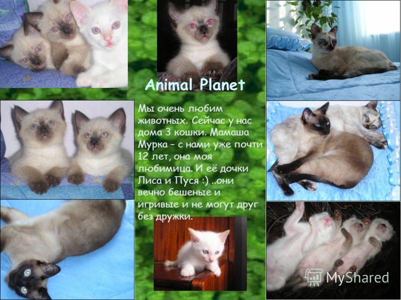 Animal Planet Мы очень любим животных. Сейчас у нас дома 3 кошки. Мамаша Мурка – с нами уже почти 12 лет, она моя любимица. И её дочки Лиса и Пуся :)..они вечно бешеные и игривые и не могут друг без дружки.