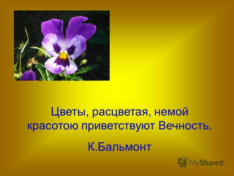 Цветы, расцветая, немой красотою приветствуют Вечность. К.Бальмонт