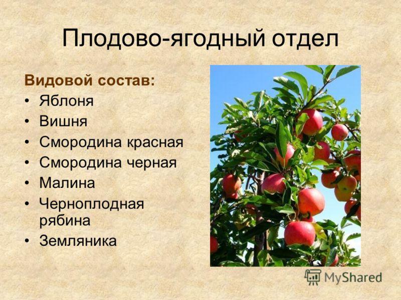 Плодово-ягодный отдел Видовой состав: Яблоня Вишня Смородина красная Смородина черная Малина Черноплодная рябина Земляника