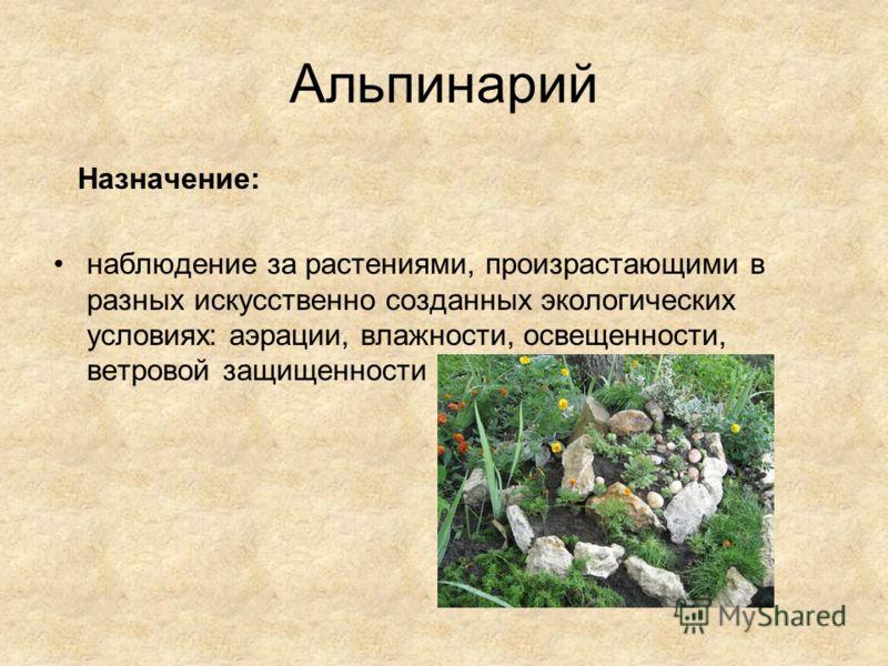 Альпинарий Назначение: наблюдение за растениями, произрастающими в разных искусственно созданных экологических условиях: аэрации, влажности, освещенности, ветровой защищенности