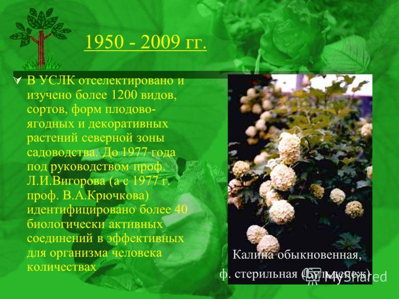 1950 - 2009 гг. В УСЛК отселектировано и изучено более 1200 видов, сортов, форм плодово- ягодных и декоративных растений северной зоны садоводства. До 1977 года под руководством проф. Л.И.Вигорова (а с 1977 г. проф. В.А.Крючкова) идентифицировано бол
