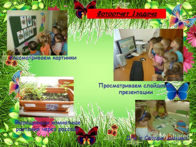Выращиваем комнатные растения через рассаду Рассматриваем картинки Фотоотчет 1задача Д/и « Собери цветок» Просматриваем слайдовые презентации
