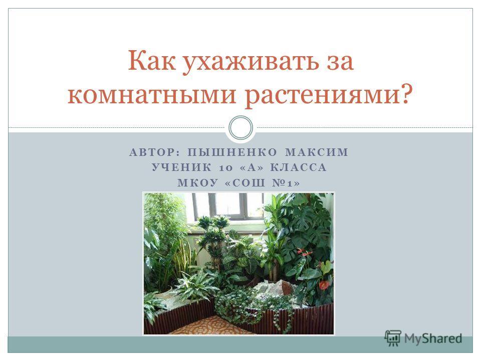 АВТОР: ПЫШНЕНКО МАКСИМ УЧЕНИК 10 «А» КЛАССА МКОУ «СОШ 1» Как ухаживать за комнатными растениями?