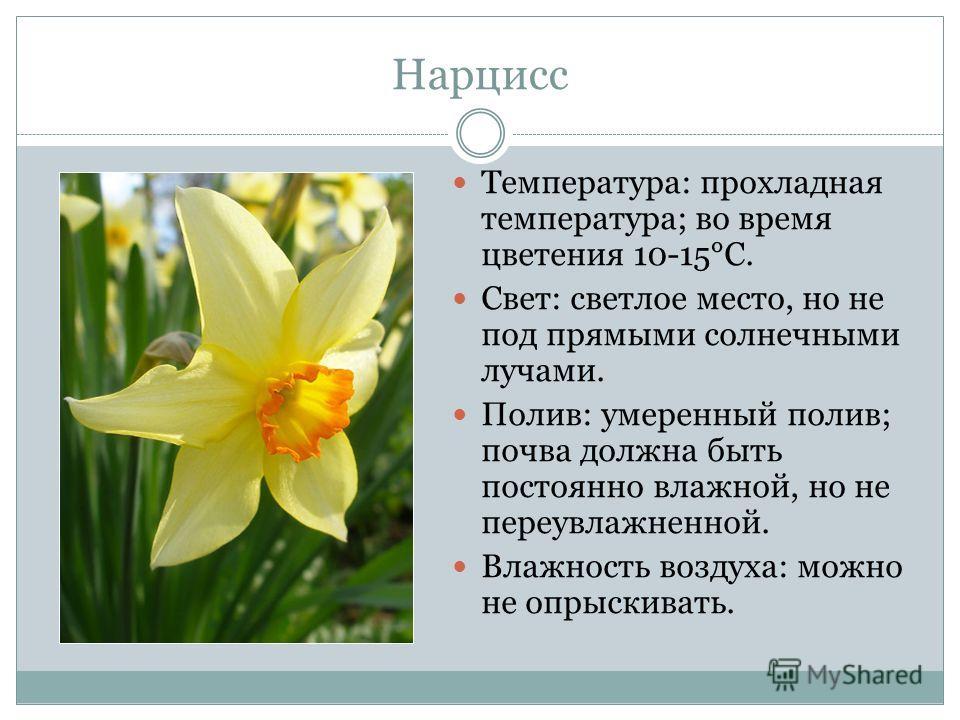 Нарцисс Температура: прохладная температура; во время цветения 10-15°С. Свет: светлое место, но не под прямыми солнечными лучами. Полив: умеренный полив; почва должна быть постоянно влажной, но не переувлажненной. Влажность воздуха: можно не опрыскив