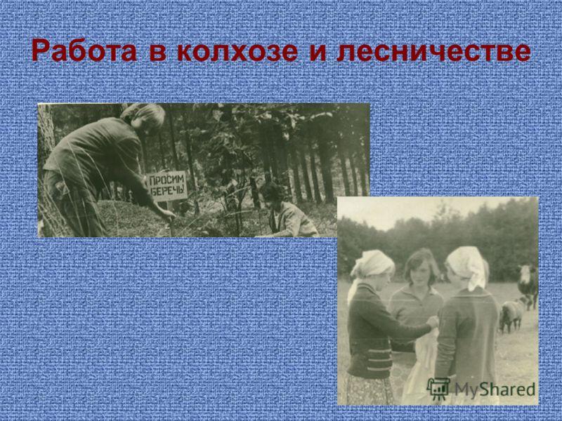 Работа в колхозе и лесничестве