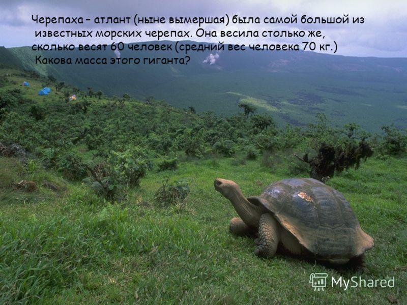 Черепаха – атлант (ныне вымершая) была самой большой из известных морских черепах. Она весила столько же, сколько весят 60 человек (средний вес человека 70 кг.) Какова масса этого гиганта?