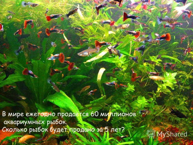 В мире ежегодно продаётся 60 миллионов аквариумных рыбок. Сколько рыбок будет продано за 5 лет?