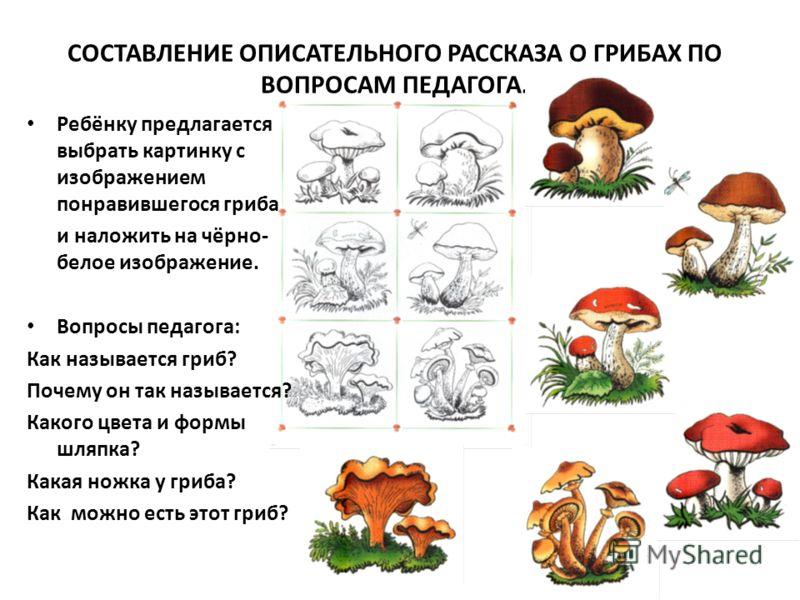 СОСТАВЛЕНИЕ ОПИСАТЕЛЬНОГО РАССКАЗА О ГРИБАХ ПО ВОПРОСАМ ПЕДАГОГА. Ребёнку предлагается выбрать картинку с изображением понравившегося гриба и наложить на чёрно- белое изображение. Вопросы педагога: Как называется гриб? Почему он так называется? Каког