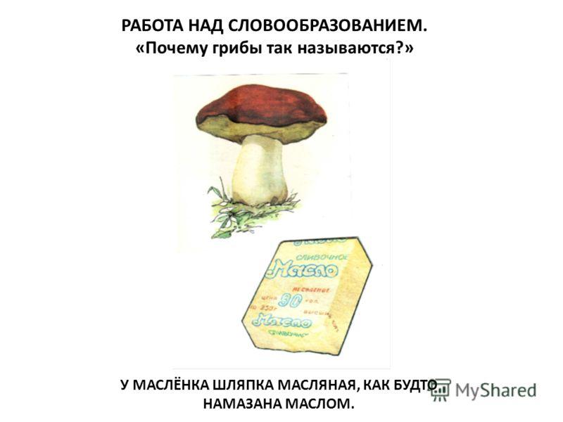 РАБОТА НАД СЛОВООБРАЗОВАНИЕМ. «Почему грибы так называются?» У МАСЛЁНКА ШЛЯПКА МАСЛЯНАЯ, КАК БУДТО НАМАЗАНА МАСЛОМ.