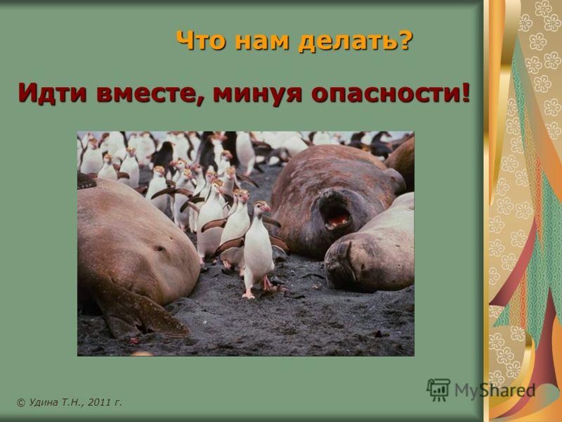 Идти вместе, минуя опасности! © Удина Т.Н., 2011 г. Что нам делать?