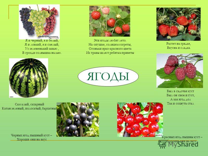 ЯГОДЫ Эти ягоды любят лето. На опушке, солнцем согреты, Огоньки ярко-красного цвета Из травы шлют ребятам приветы Растет на грядке, Вкусна и сладка. Был в садочке куст Был он свеж и густ, А как ягод дол Так и сохнуть стал Красных ягод пышны куст – Хо