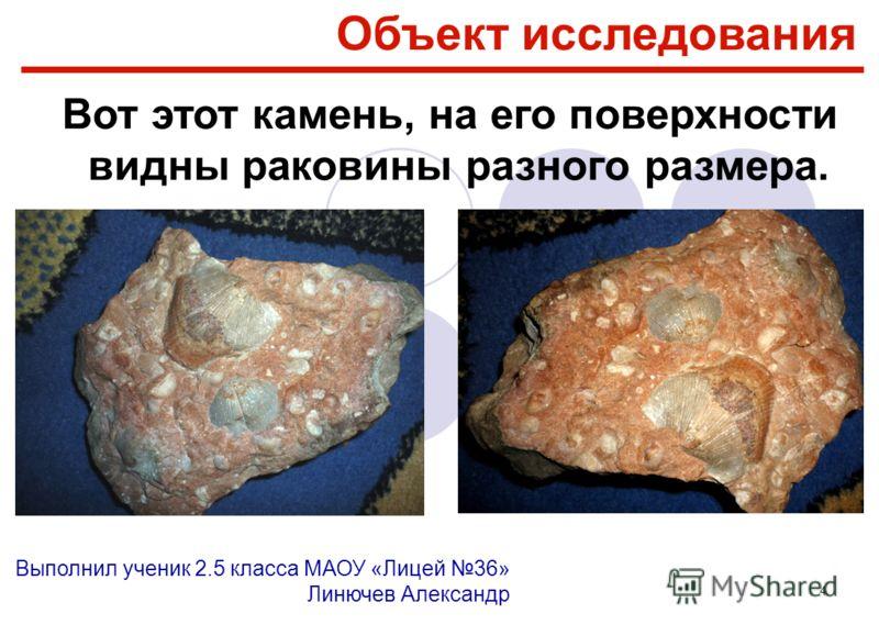 4 Вот этот камень, на его поверхности видны раковины разного размера. Объект исследования Выполнил ученик 2.5 класса МАОУ «Лицей 36» Линючев Александр