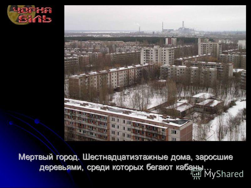 Мертвый город. Шестнадцатиэтажные дома, заросшие деревьями, среди которых бегают кабаны…