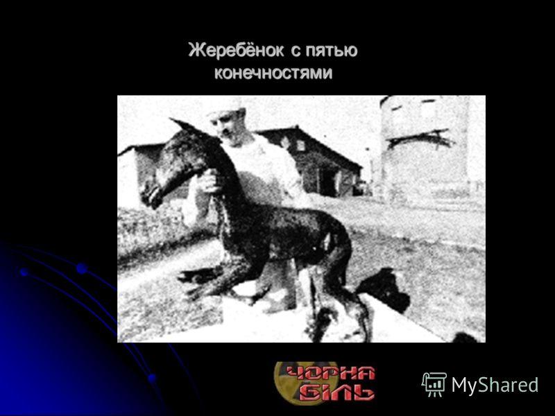 Жеребёнок с пятью конечностями Сосна от облучения радиацией стала гигантской (слева)Сосна от облучения радиацией стала гигантской (слева)