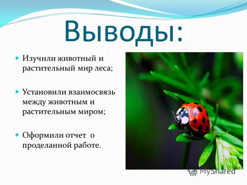 Выводы: Изучили животный и растительный мир леса; Установили взаимосвязь между животным и растительным миром; Оформили отчет о проделанной работе.