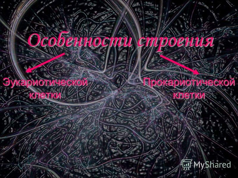 Организмы Прокариоты (безъядерные)Эукариоты (ядерные)