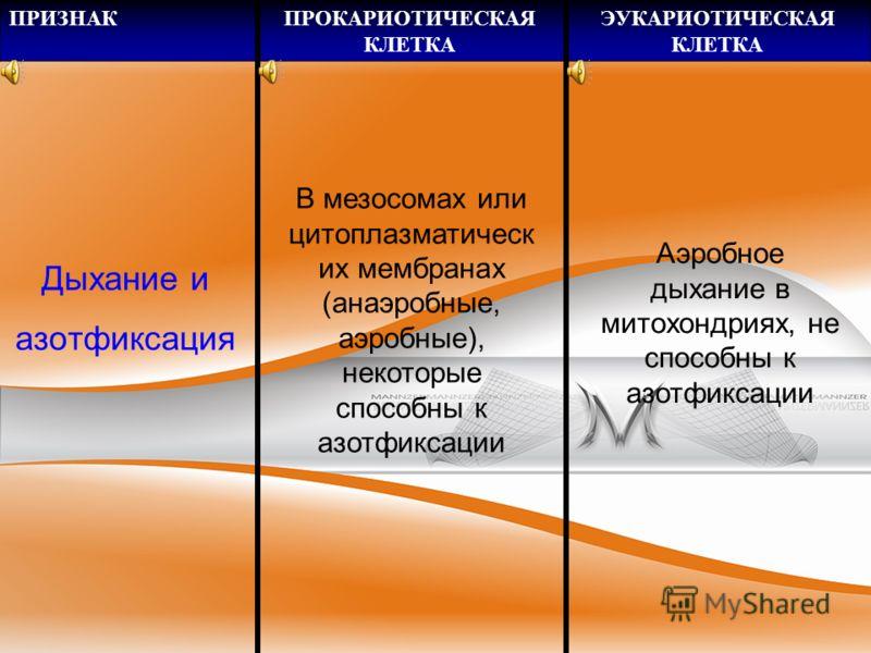 ПРИЗНАКПРОКАРИОТИЧЕСКАЯ КЛЕТКА ЭУКАРИОТИЧЕСКАЯ КЛЕТКА Жгутики, реснички Простые состоят из 1 или нескольких фибрилл, работают за счет энергии протонного градиента Сложные, состоят из 20 и более фибрилл, работают за счет энергии АТФ