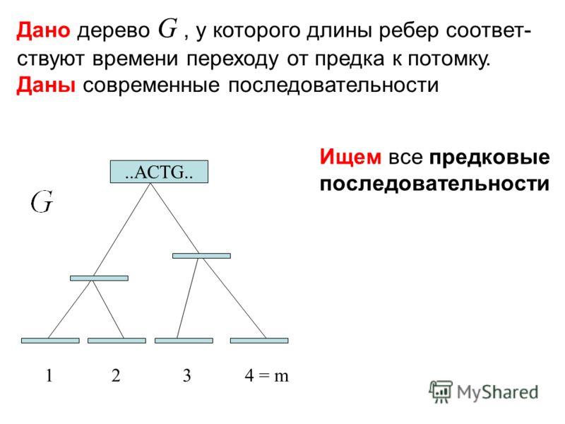 Дано дерево G, у которого длины ребер соответ- ствуют времени переходу от предка к потомку. Даны современные последовательности Ищем все предковые последовательности 1234 = m..ACTG..