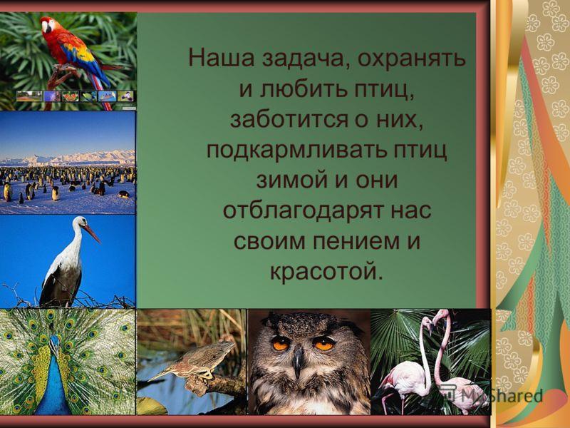 Наша задача, охранять и любить птиц, заботится о них, подкармливать птиц зимой и они отблагодарят нас своим пением и красотой.