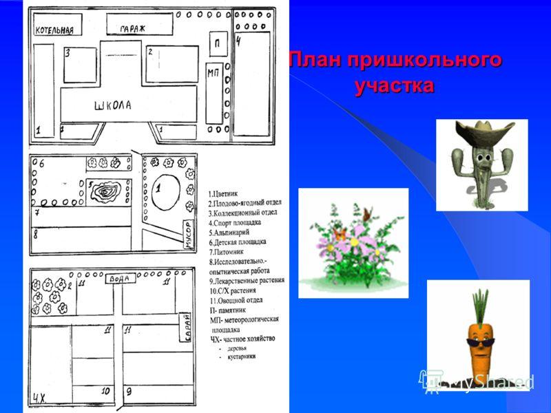 План пришкольного участка