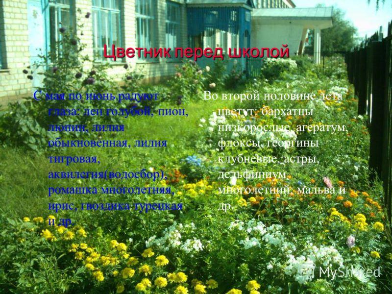 Цветник перед школой С мая по июнь радуют глаза: лен голубой, пион, люпин, лилия обыкновенная, лилия тигровая, аквилегия(водосбор), ромашка многолетняя, ирис, гвоздика турецкая и др. Во второй половине лета цветут: бархатцы низкорослые, агератум, фло