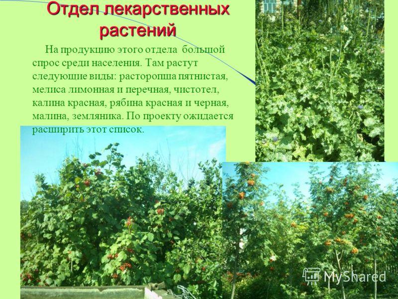 Отдел лекарственных растений На продукцию этого отдела большой спрос среди населения. Там растут следующие виды: расторопша пятнистая, мелиса лимонная и перечная, чистотел, калина красная, рябина красная и черная, малина, земляника. По проекту ожидае