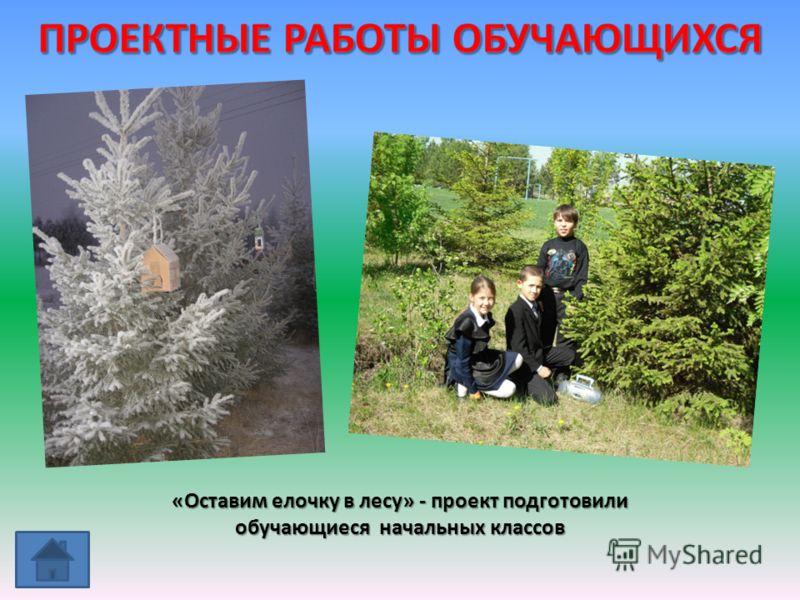«Оставим елочку в лесу» - проект подготовили обучающиеся начальных классов