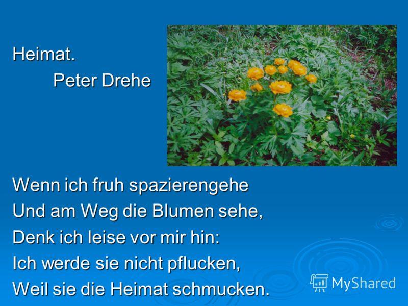 Heimat. Peter Drehe Wenn ich fruh spazierengehe Und am Weg die Blumen sehe, Denk ich leise vor mir hin: Ich werde sie nicht pflucken, Weil sie die Heimat schmucken.
