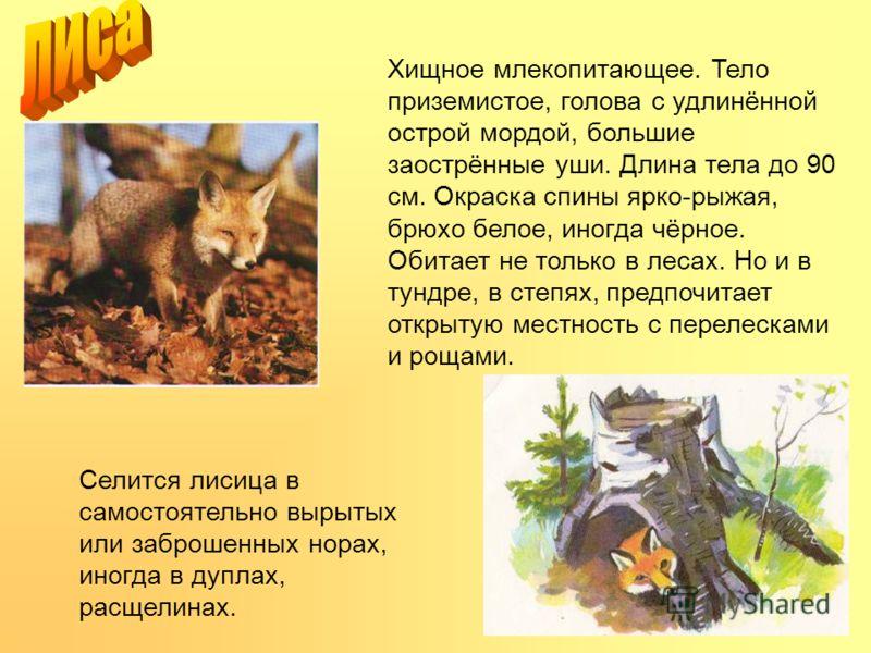 Хищное млекопитающее. Тело приземистое, голова с удлинённой острой мордой, большие заострённые уши. Длина тела до 90 см. Окраска спины ярко-рыжая, брюхо белое, иногда чёрное. Обитает не только в лесах. Но и в тундре, в степях, предпочитает открытую м