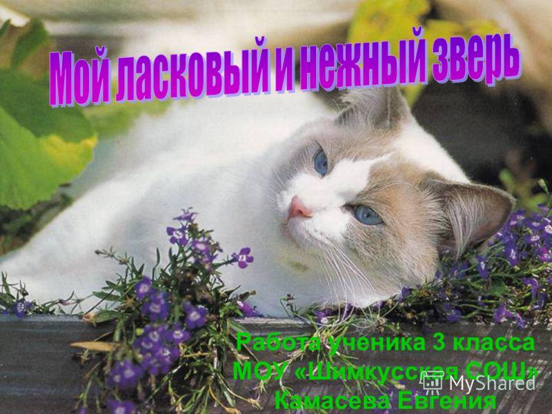 Работа ученика 3 класса МОУ «Шимкусская СОШ» Камасева Евгения
